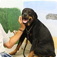 Adopt A Pet :: Cinderella - Elyria, OH