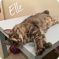 Adopt A Pet :: Ellie - URGENT - Troy, MI