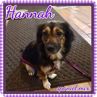 Spaniel (Unknown Type) Mix Dog for adoption in Bogalusa, Louisiana - Hannah