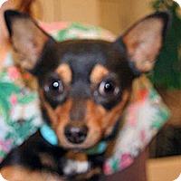 Adopt A Pet :: Porkchop - Wildomar, CA