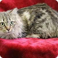 Adopt A Pet :: Shila - Greensboro, NC