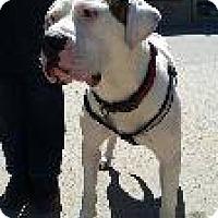 Adopt A Pet :: Alpha - Toronto, ON