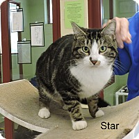Adopt A Pet :: Star - Slidell, LA