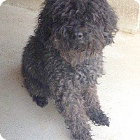 Adopt A Pet :: Anchovy - Savannah, GA