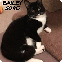 Adopt A Pet :: Bailey - Spring, TX
