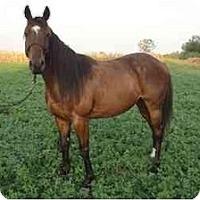 Adopt A Pet :: Richela - Dewey, IL