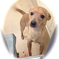 Adopt A Pet :: A1032295 - calimesa, CA