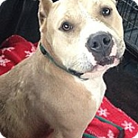 Adopt A Pet :: LEXIS - Pittsburgh, PA