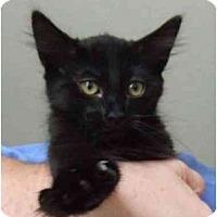 Adopt A Pet :: Shaggy and Friends - Lake Charles, LA