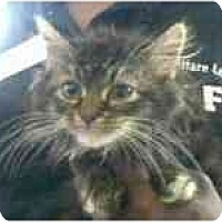 Adopt A Pet :: Chrissy - Arlington, VA