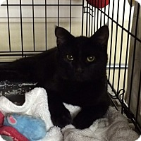 Adopt A Pet :: Rey - Byron Center, MI