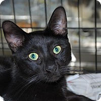 Adopt A Pet :: Pharoah - Pottsville, PA