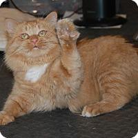 Adopt A Pet :: Ponder - Frankfort, IL