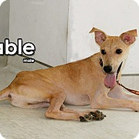 Adopt A Pet :: Fable - Surrey, BC