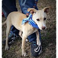 Adopt A Pet :: Marley - Groton, MA