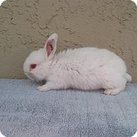 Adopt A Pet :: Tic Tac - Bonita, CA
