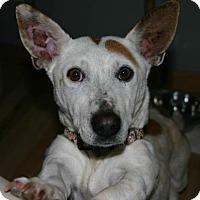 Adopt A Pet :: Callie - Wheatland, WY