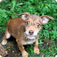 Adopt A Pet :: Sparky - Bloomington, MN