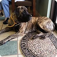 Adopt A Pet :: Farren - Chippewa Falls, WI