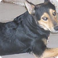 Adopt A Pet :: Bones - San Ysidro, CA