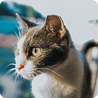 Adopt A Pet :: Raja - Indianapolis, IN