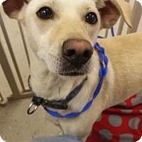 Adopt A Pet :: Hope - Fresno CA, CA