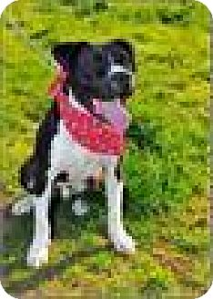 Pit Bull Terrier Mix Dog for adoption in Freeport, New York - Dee/Diesel