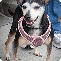 Adopt A Pet :: Minna - Loudonville, NY