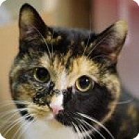 Adopt A Pet :: Miss Pepper - Medford, MA