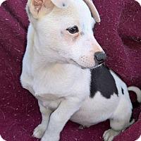 Adopt A Pet :: Tye - West Springfield, MA