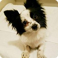 Adopt A Pet :: Bennie - Durham, NC