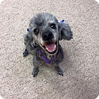 Adopt A Pet :: Lucy - Kettering, OH
