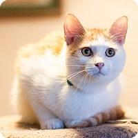 Adopt A Pet :: Hildago - Faribault, MN