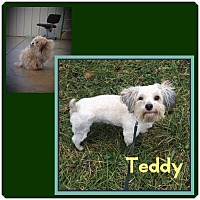 Adopt A Pet :: Teddy - Fort Wayne, IN