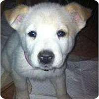 Adopt A Pet :: Kimba - Scottsdale, AZ
