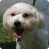 Adopt A Pet :: Fiesta - Rockaway, NJ