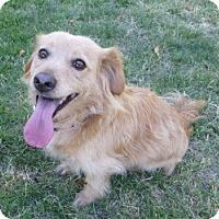 Adopt A Pet :: Larry - Sacramento, CA