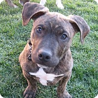 Adopt A Pet :: Stewart - San Jose, CA