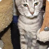 Adopt A Pet :: Jasmine - Edmond, OK