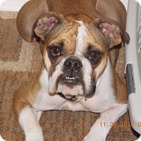 Adopt A Pet :: Dixie - Cibolo, TX