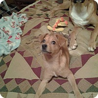 Adopt A Pet :: Junior - Burlington, NJ