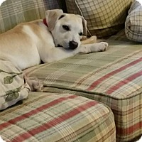 Adopt A Pet :: Biscuit - Winchester, VA