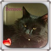 Adopt A Pet :: Benson - Harrisburg, NC