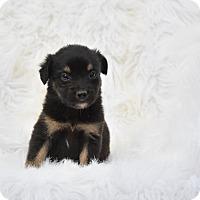 Adopt A Pet :: Shiloh - Charlemont, MA