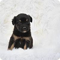 Adopt A Pet :: Shiloh - Groton, MA
