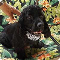 Adopt A Pet :: Mattie -Adopted! - Kannapolis, NC