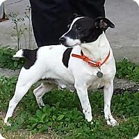 Adopt A Pet :: GEORGIE-such a great dog! - Terra Ceia, FL