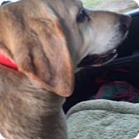 Adopt A Pet :: Roxy - Buckeystown, MD
