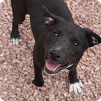 Adopt A Pet :: Lucie - Henderson, NV