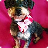 Adopt A Pet :: Laverne - Irvine, CA